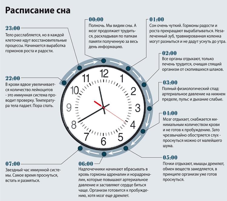 Расписание сна