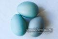 яйца синего цвета